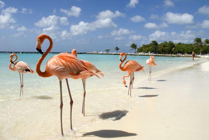 10 spiagge caraibiche a misura di famiglia - La rosa racconta la vita dei divi ...
