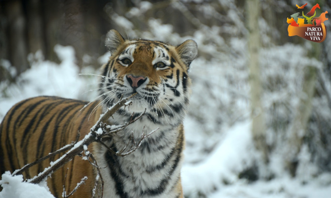 Parco natura viva natale con gli animali - Immagini di animali dello zoo per bambini ...