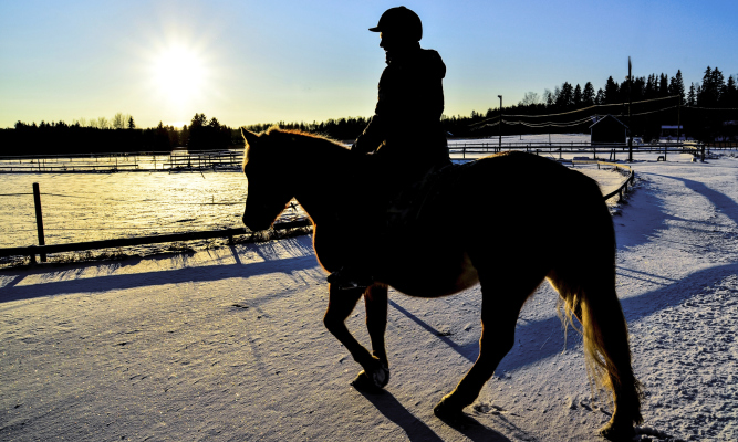 Bolzano al galoppo nella neve for Cavalli bolzano
