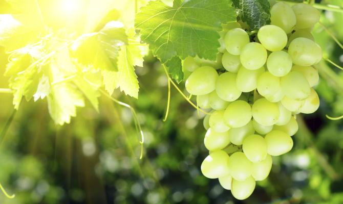 Settembre 5 ricette a base di uva - Uva da tavola puglia ...
