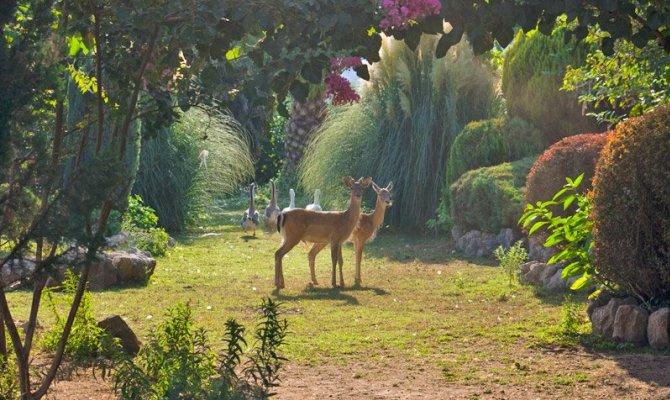 Airola piante e animali da tutto il mondo nel giardino - Immagini di giardini di villette ...