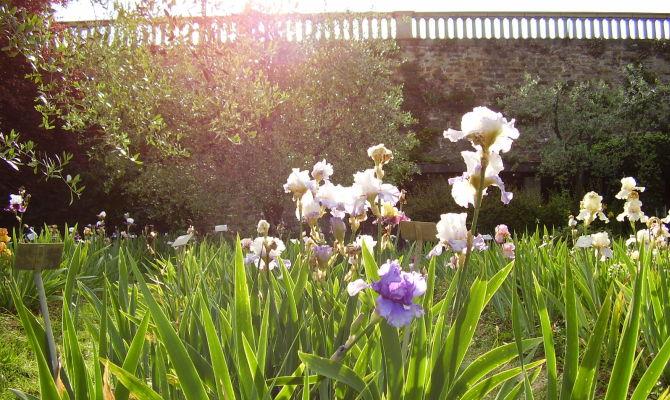 Firenze nascosta le meraviglie del giardino dell 39 iris - Giardino dell iris firenze ...