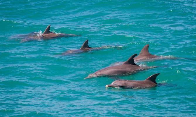 Via libera al bagno con i delfini nei parchi acquatici protestano