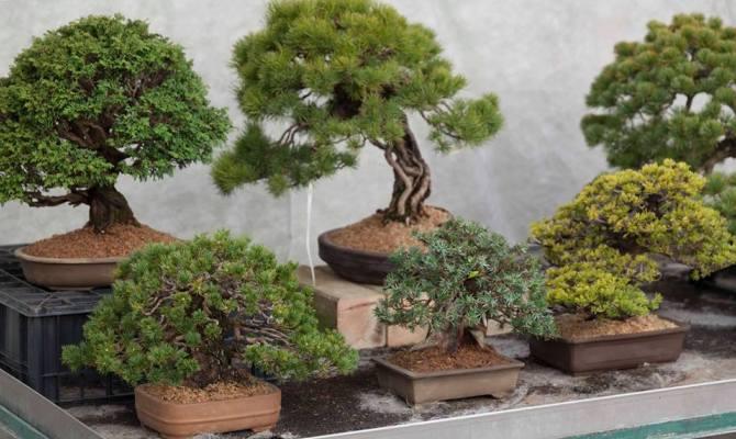 l 39 arte del bonsai in un giardino alle porte di milano