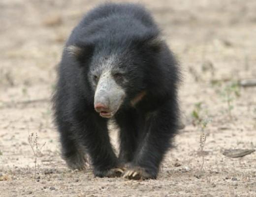 Ambiente a animali da vedere for Cabina di montagna grande orso