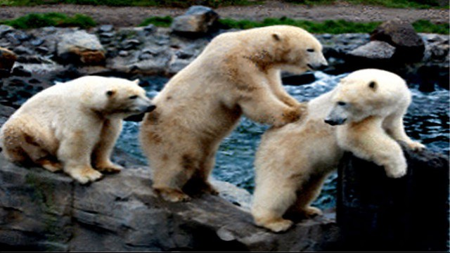 Zoo e acquari da non perdere in europa for Cabine marine di grandi orsi