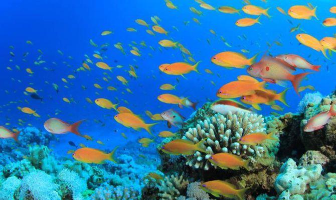 Sharm el Sheikh, paradiso per sub