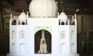 The Taj Mahal Dog House