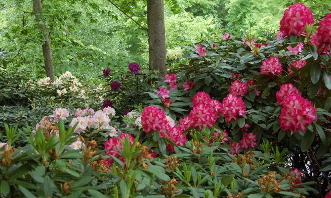 Merano, i rimedi naturali dei Giardini di Sissi