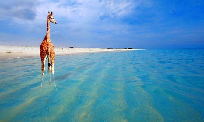 Dreaming Caraibi Aruba L Isola Della Felicita