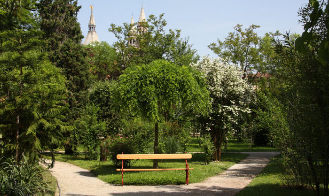 Padova l orto botanico e le sue curiosità