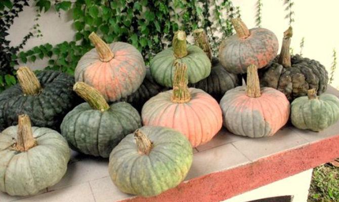 Immagine Zucca Di Halloween 94.Mantova Qui Le Zucche Migliori D Italia