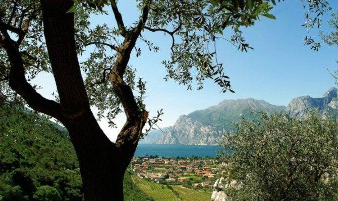 Trentino, il miglior fruttato del mondo