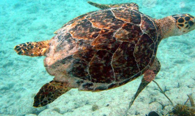 aruba nel regno delle tartarughe