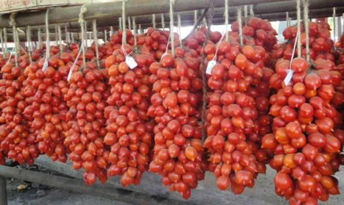 Come ottenere pomodori in anticipo? : Orticoltura