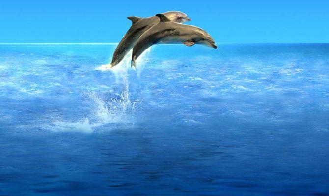 Marsa alam immersioni con i delfini - Bagno coi delfini ...