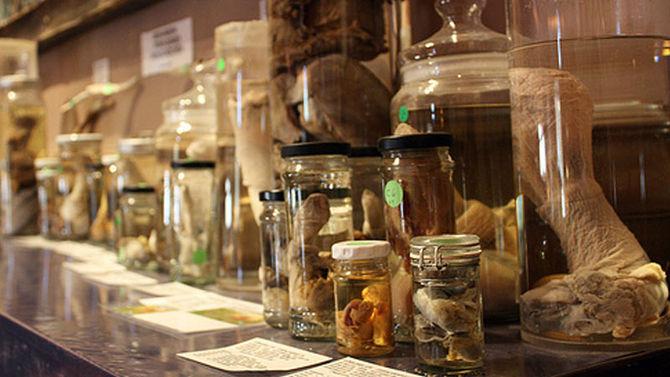Museo del Fallo