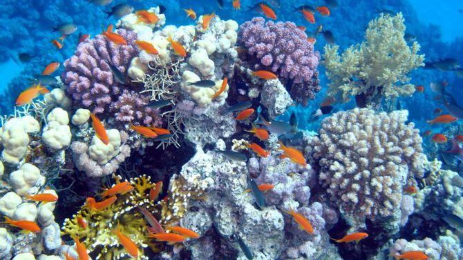 Meraviglie dal mondo degli oceani for Sfondi pesci tropicali